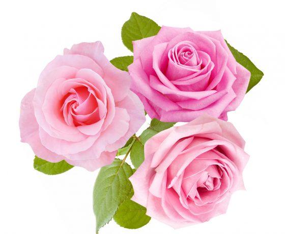 order flowers-i-santorii